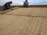 Bambu Kamış Dekor